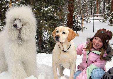 dog-saved-christmas-vacation-2