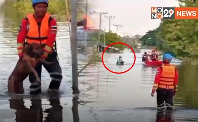 ชื่นชมกู้ภัย เดินลุยน้ำ ช่วยสุนัขเข้าฝั่ง